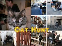 Cat Hunt, Queens, New York