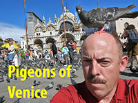 Venice: Pigeons of St. Marks Square (2007)